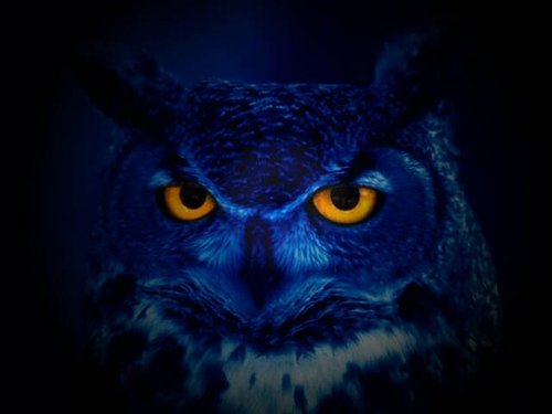 Special Type of DNA in Owl Eyes May Supercharge Night Vision