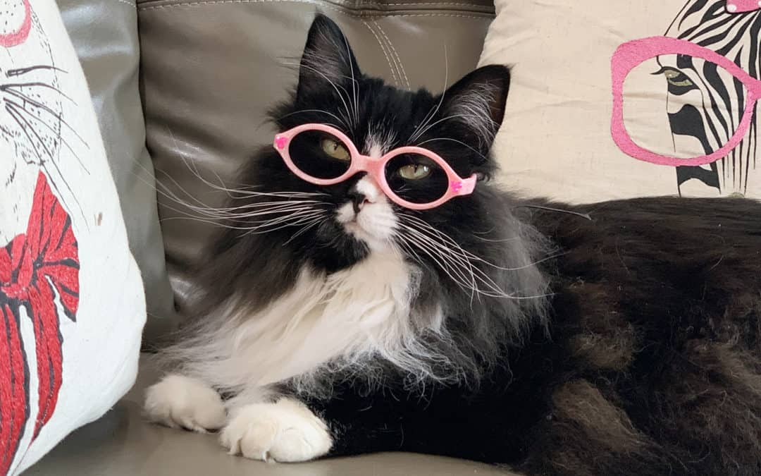 Rescue Cat Helps Kids With Eyesight Problems