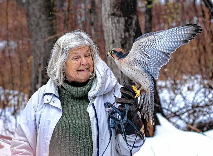 Banner the Falcon Thrives After Cataract Surgery